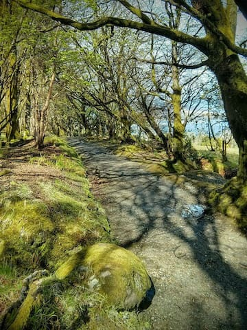 Woodland walk from Craigmore to Rothesay.