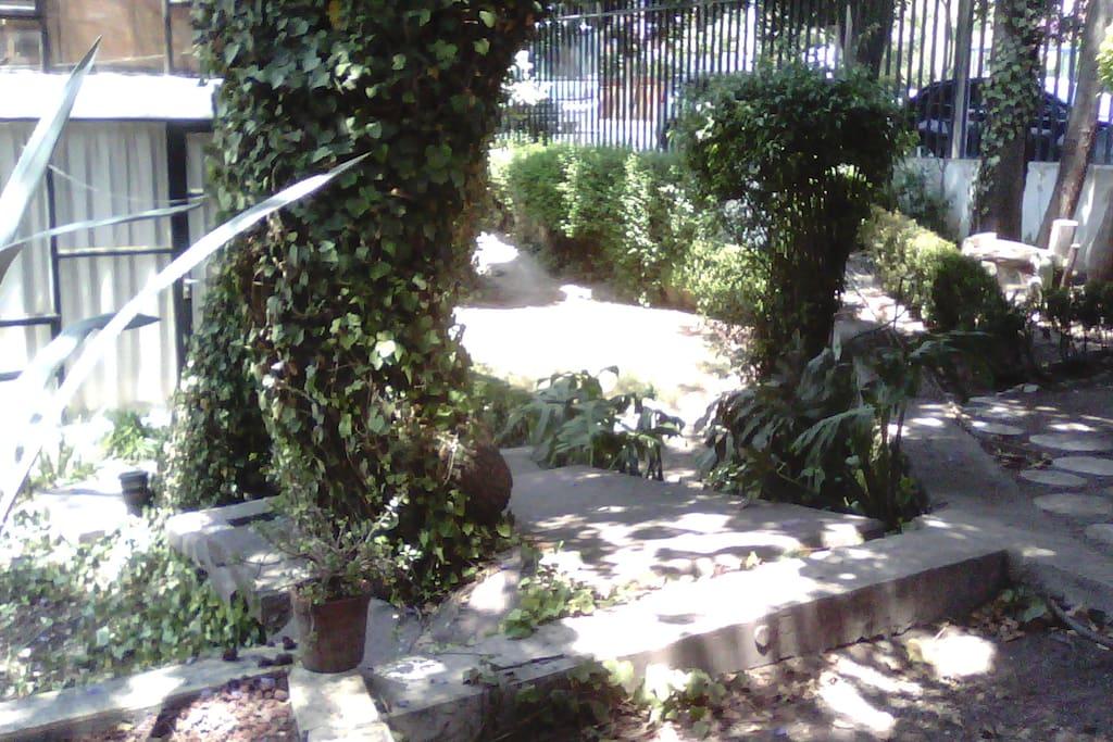 Jardin de la casa.