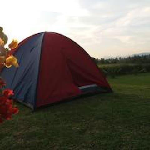 ✪ Valley Camping Zone ✪ @Bambü Getaway