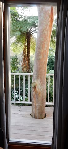 The balcony encapsulating our favourite tree, a beautiful red gum