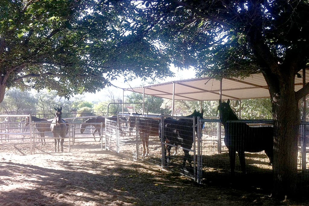 On site - 9 wonderful Morgan horses for a complete horse ranch experience. Riding lessons and/or trail rides can be arranged.