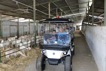 guided motorized tour inthe Moshav for up to 5 people for viewing animals, fruit trees, agriculture, nature,  historical sites  - NIS 250 for an hour tour and NIS 500 for a two-hour tour. The date and time of the tour must be arranged  advance