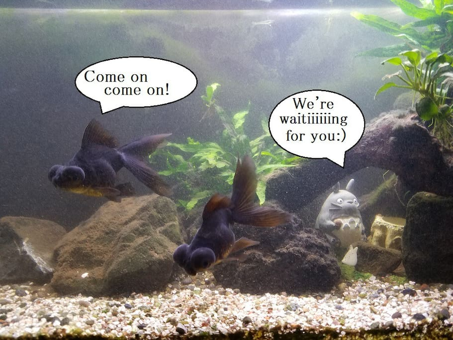 Sometimes I will exchange these fishes to others.