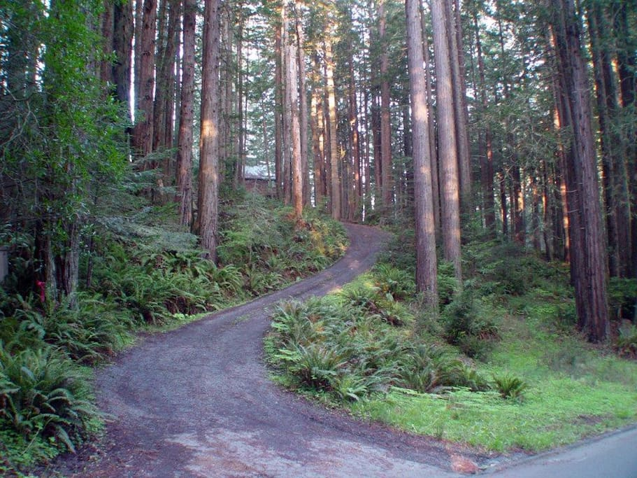 Nearby forest trail