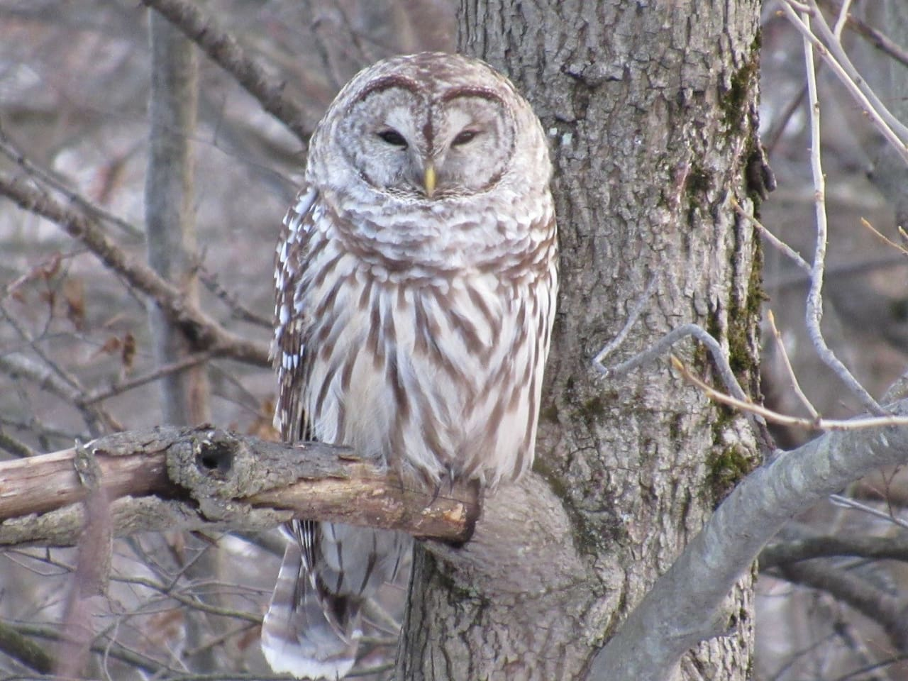 Woodland Owls and other creature are abundant on the lake! Scroll down for room and all seasons pictures...