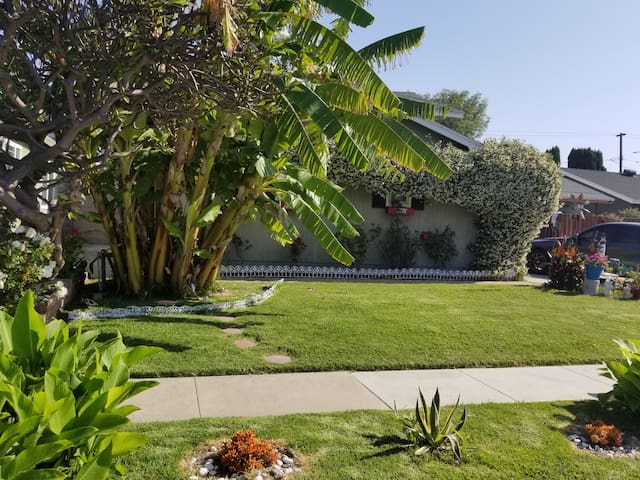 As you approach the house you will see the big banana tree on the left.