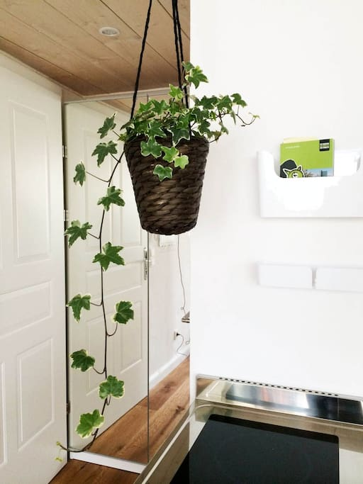 You enter the loft and will be welcomed by plants that let you feel at home and relax.