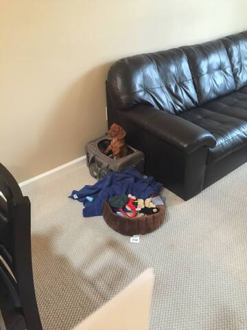 Great location, mediocre couch - Reston - Wohnung