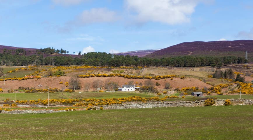 Cosy Scottish cottage with seaview in Brora - Clynelish - Dom