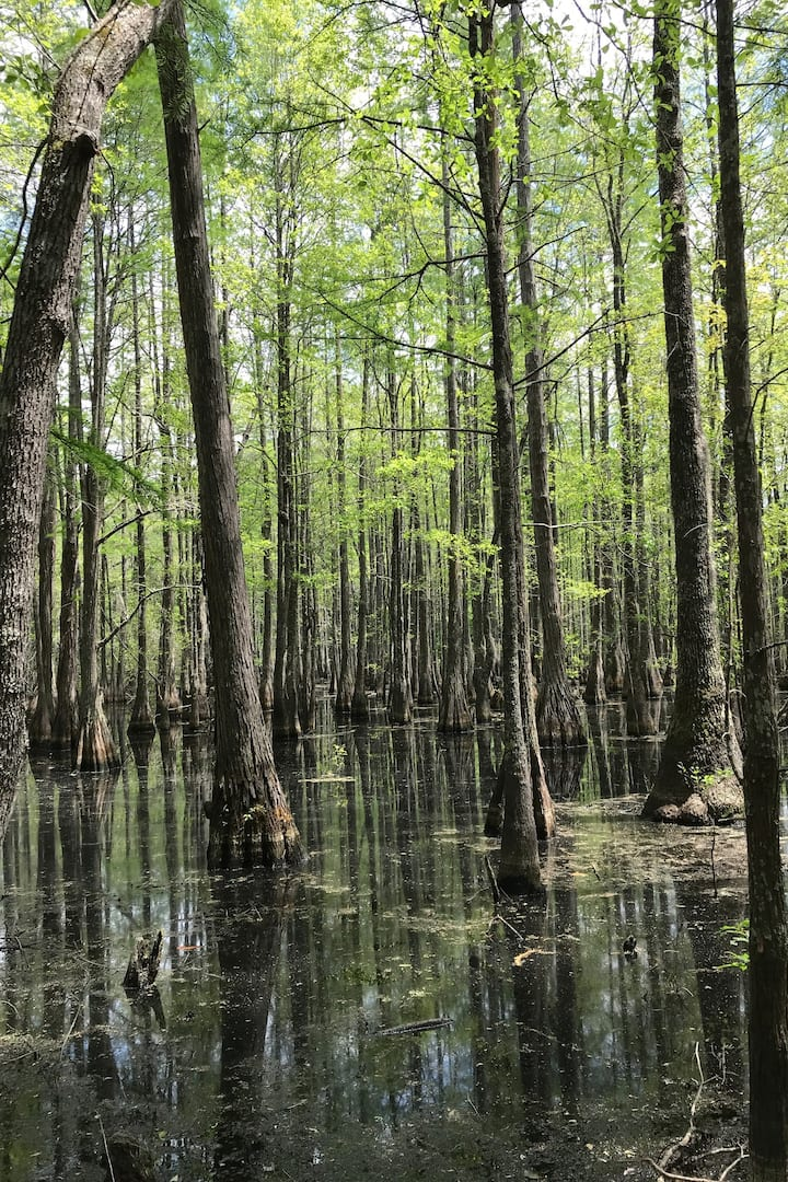 Swamps are majestic.