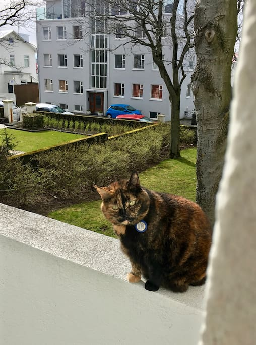 Freyja, the cat, might come by to visit you. But if you want a cat free stay I can make sure she doesn't get into the apartment.