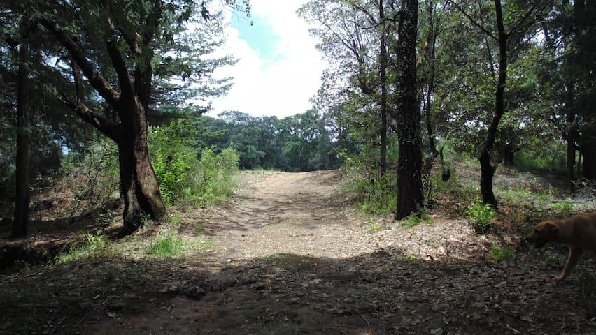 Rancho en el bosque para acampar, grupos grandes