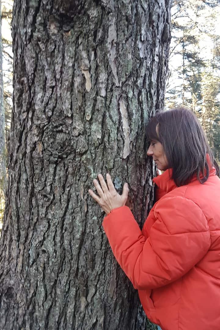 contact avec l'arbre