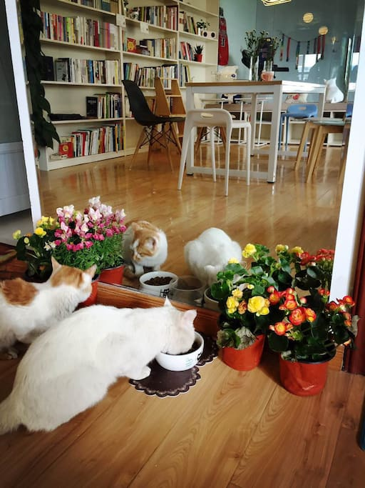 猫及客厅一角