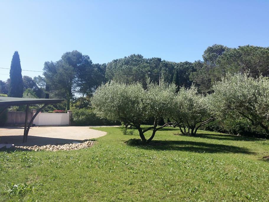 grand jardin d'oliviers