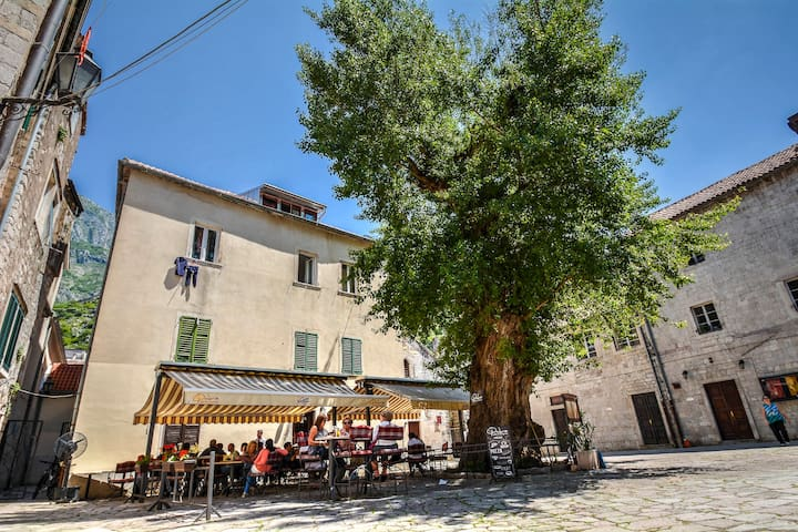 Nice Studio in historic Old town - Kotor - Wohnung