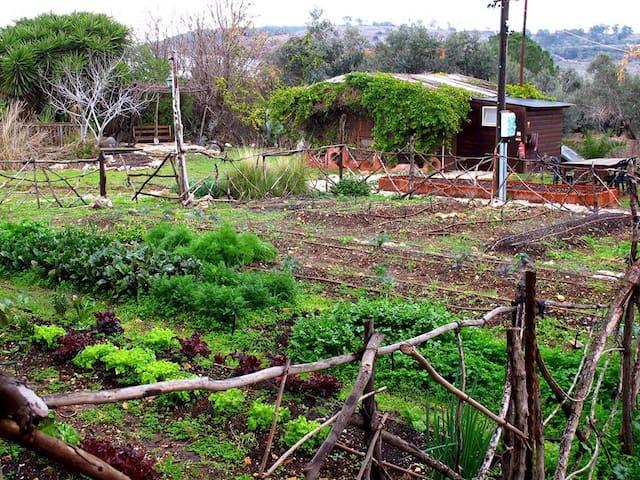 Yarok az ecolodge and farm