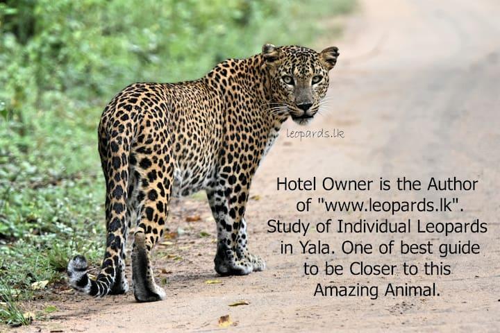 Special Leopard Safaris