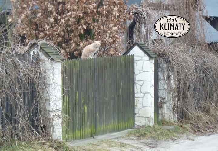 Galeria KLIMATY - cały dom