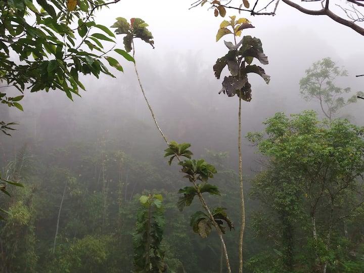 Rain forest Bali
