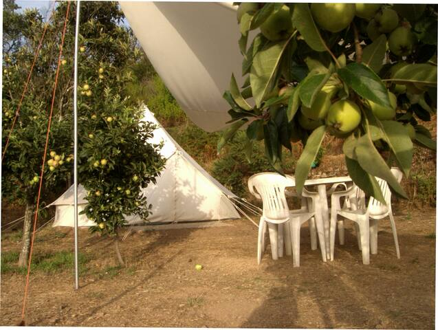 "Bell Tent ""The White House"""