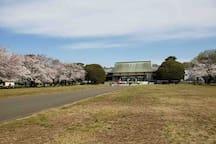 小金井公園 Koganei Park