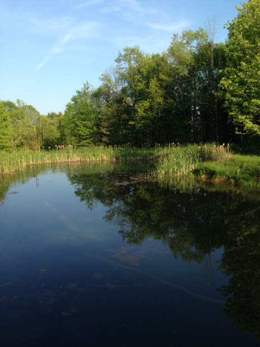A view of the pond, from the dock