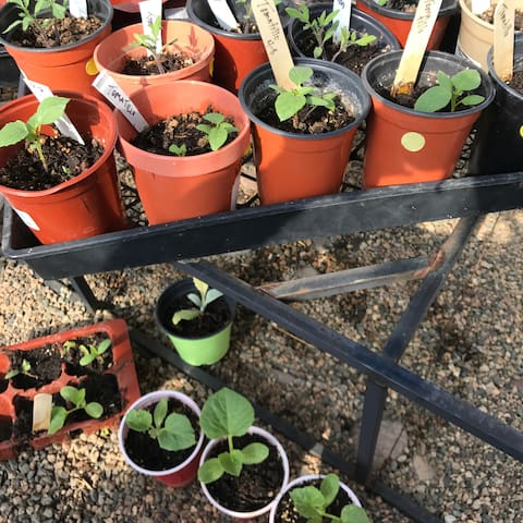Plant starts in the greenhouse