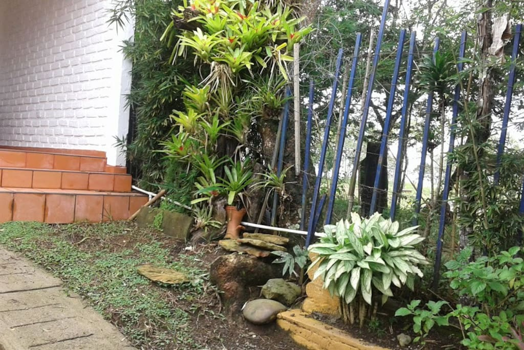 Jardin del acceso a la casa.
