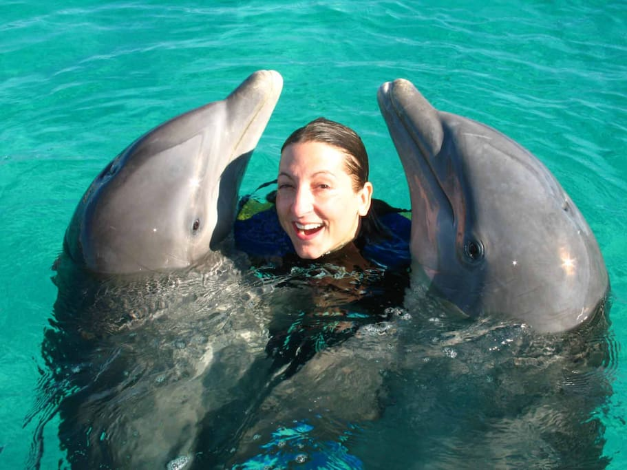 UNEXSO swimming with the dolphins...tours available