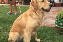 Nuestra perra Lily le da la bienvenida a todos los huéspedes, es extremadamente buena y simpática y le encantan las visitas