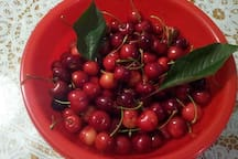 Black cherry from our garden