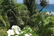 Jardin flamboyant