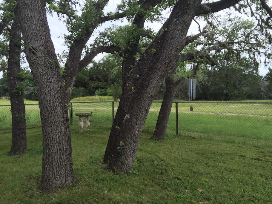 Shady fenced backyard for fido, barbecues, birdwatching