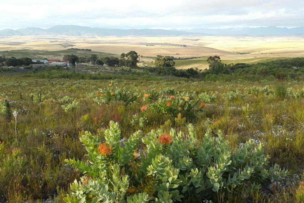 Fynbos Valley