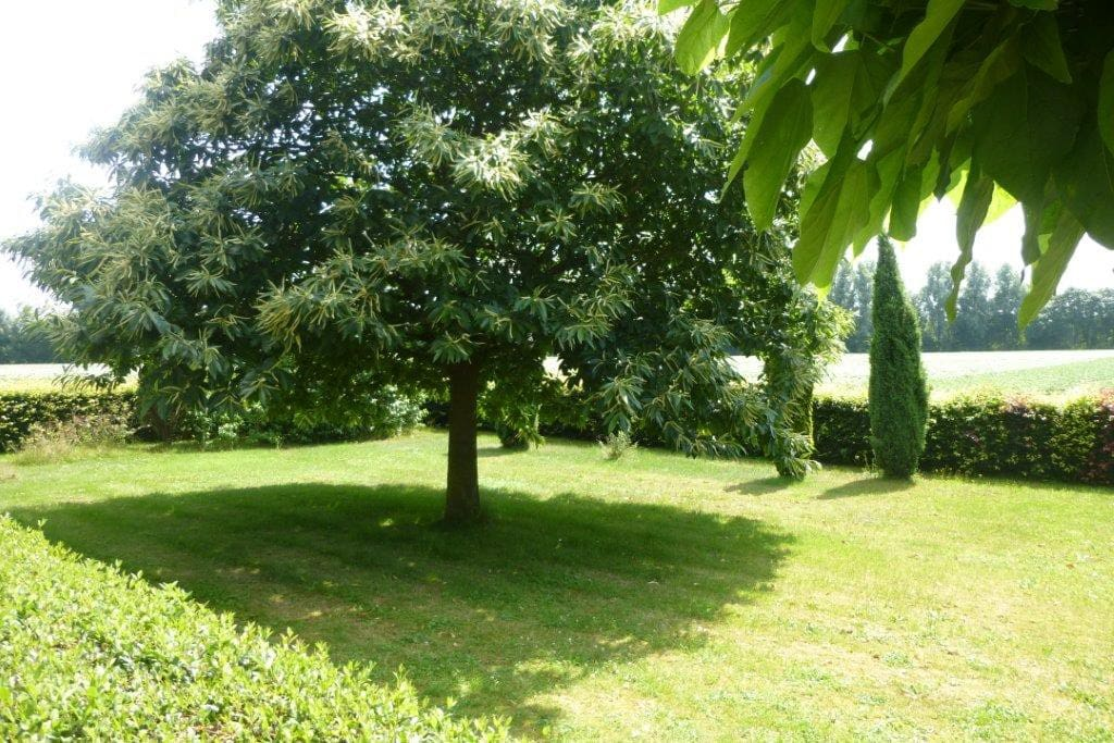 Garden behind the house with chestnut tree