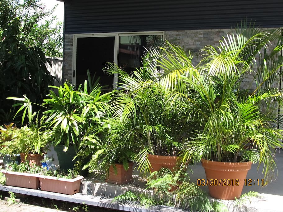 Tropical Gardens Create the Privacy