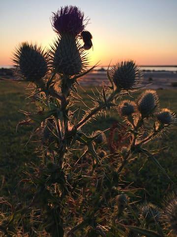 På strandängen i solnedgången