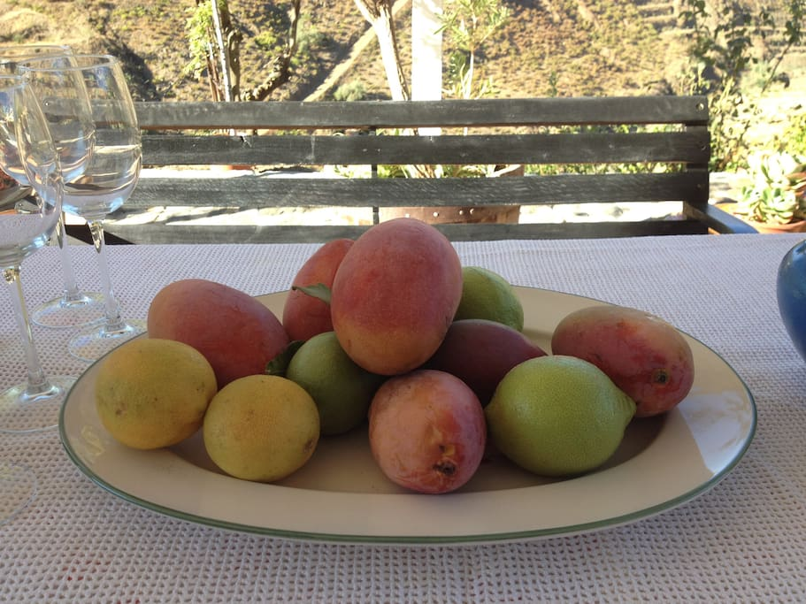 When the mangoes are really ripe......the hostess Trinidad will provide you with these sweet freshly picked fruits!