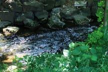 Unser Grundstück  liegt an 3 Seiten des Bachlaufes