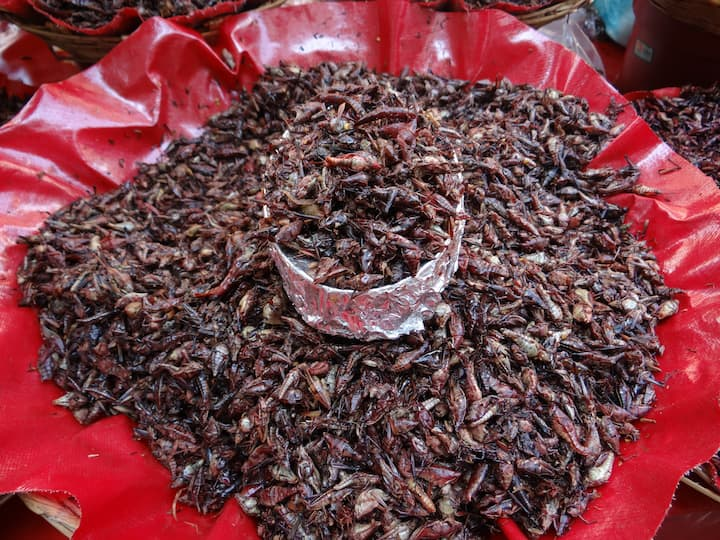 Grasshoppers/ Chapulines