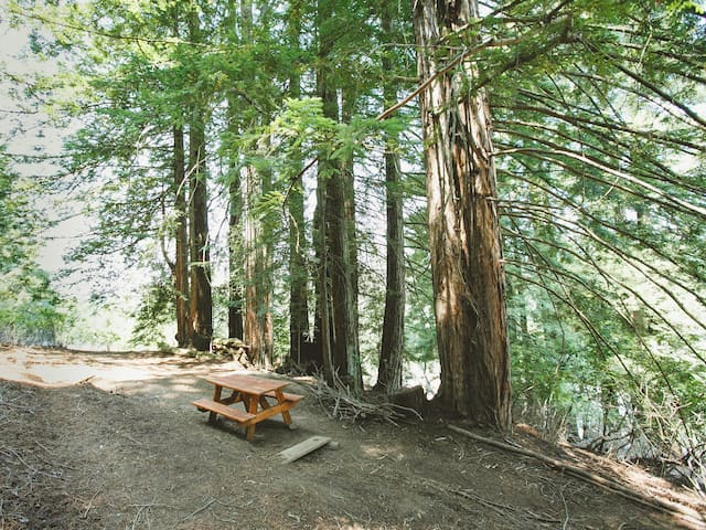 Tentrr BackCountry - Enchanted Forest Cosmo Site