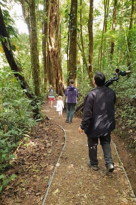 A stroll in nature's garden