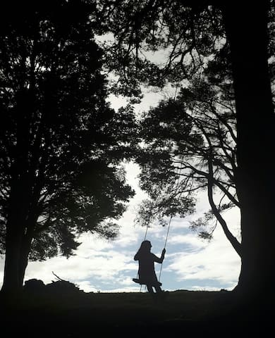 Get reconnected with the child within....take a swing under our very own Tane Mahuta . Tradition for every guest