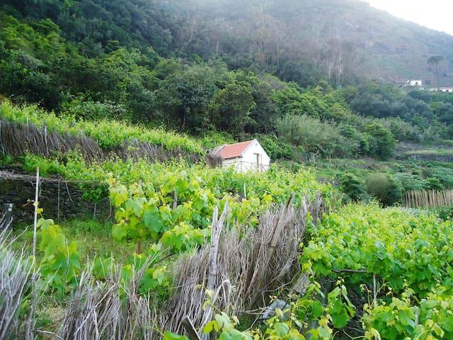 Vistas do Palheiro rodeado pelas vinhas