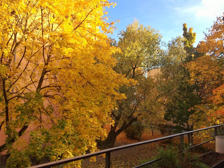 view from balcony - indian summer in Berlin