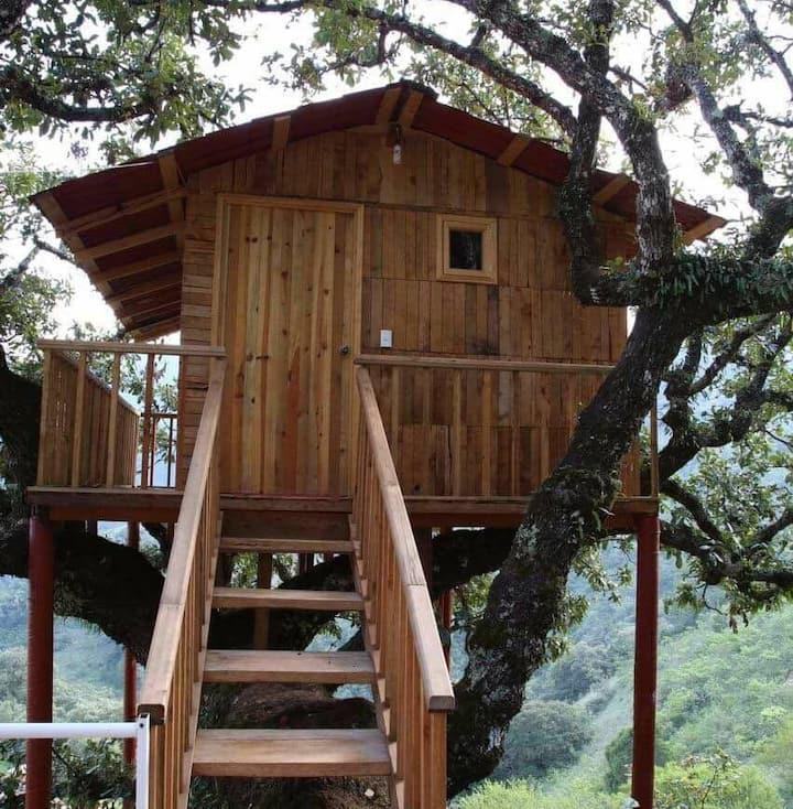 Cabaña del árbol/Cabañas Xakali