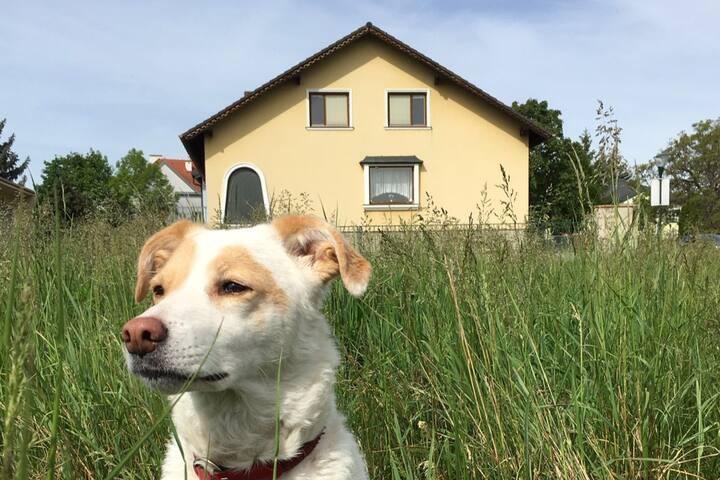 Timetravel-Holidayhouse with garden near Vienna