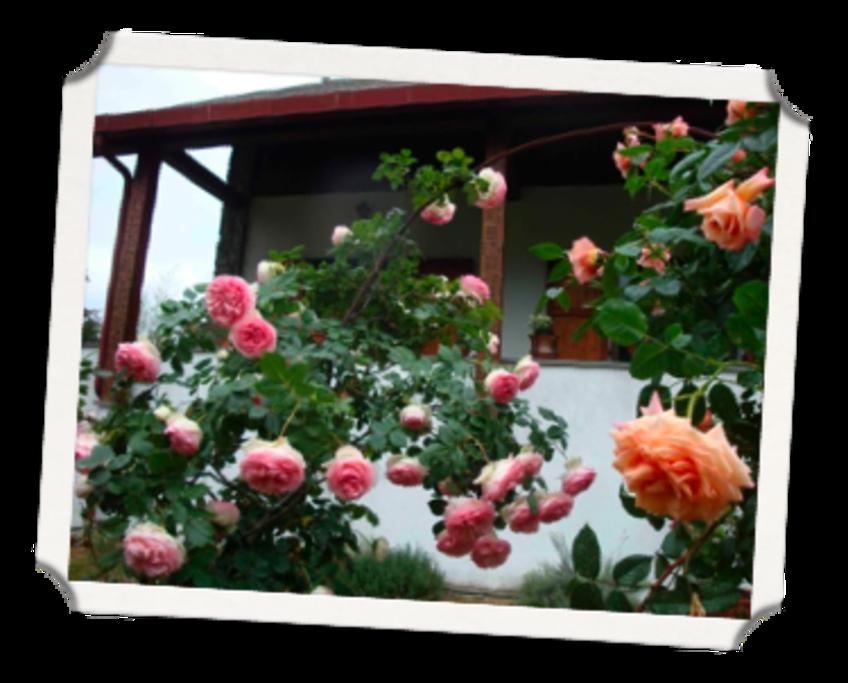 Esterno casa con rose fiorite