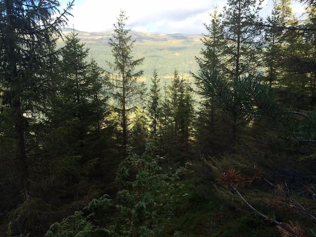 Det er mulig å ta en tur i skogen bak hyttene